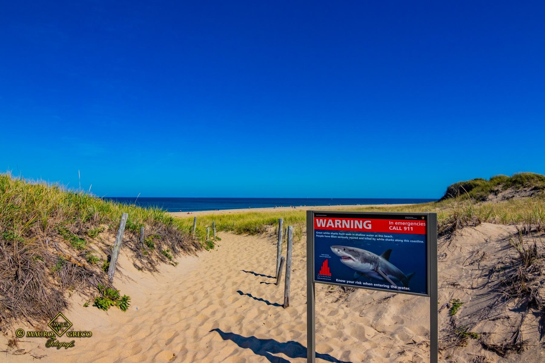 Cape Cod Massachusetts USA Great White Shark viaggi fotografici e vacanze Mauro Greco fotografo